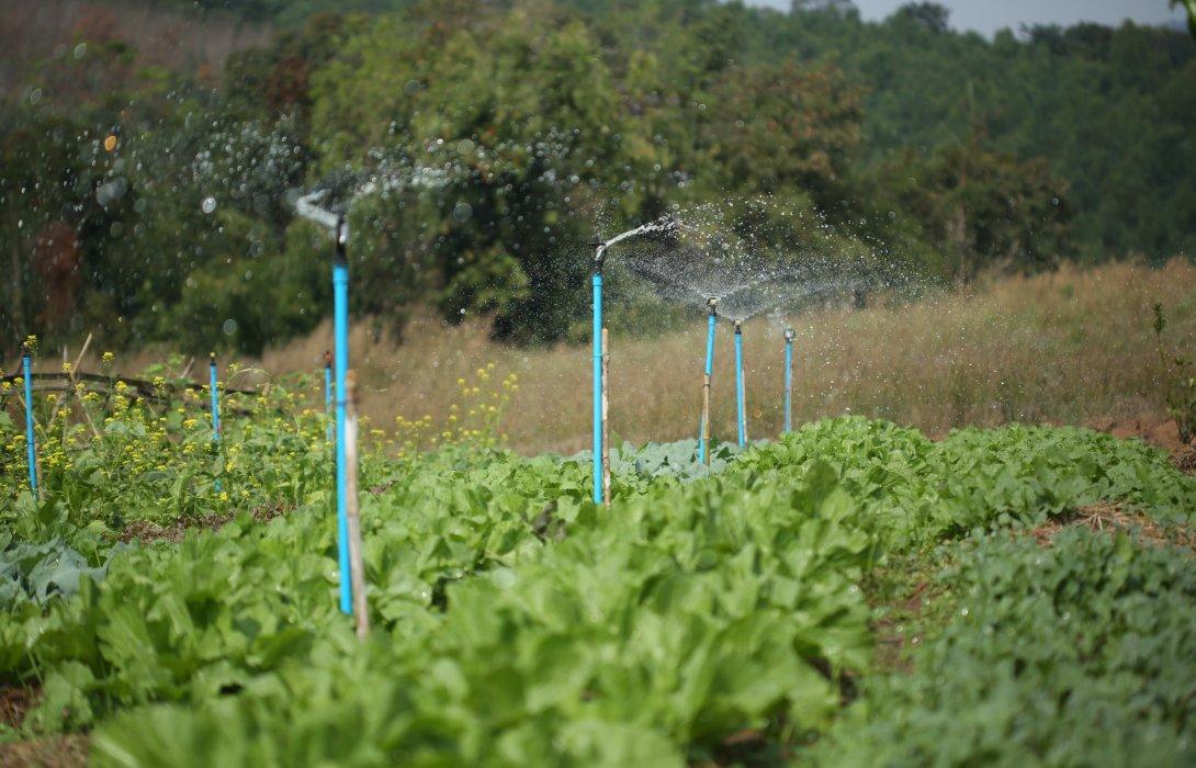 'บ้านก้างปลา'อ.ด่านซ้าย จ.เลย หมู่บ้านต้นแบบ Smart Farmer  ใช้เกษตรทางเลือก