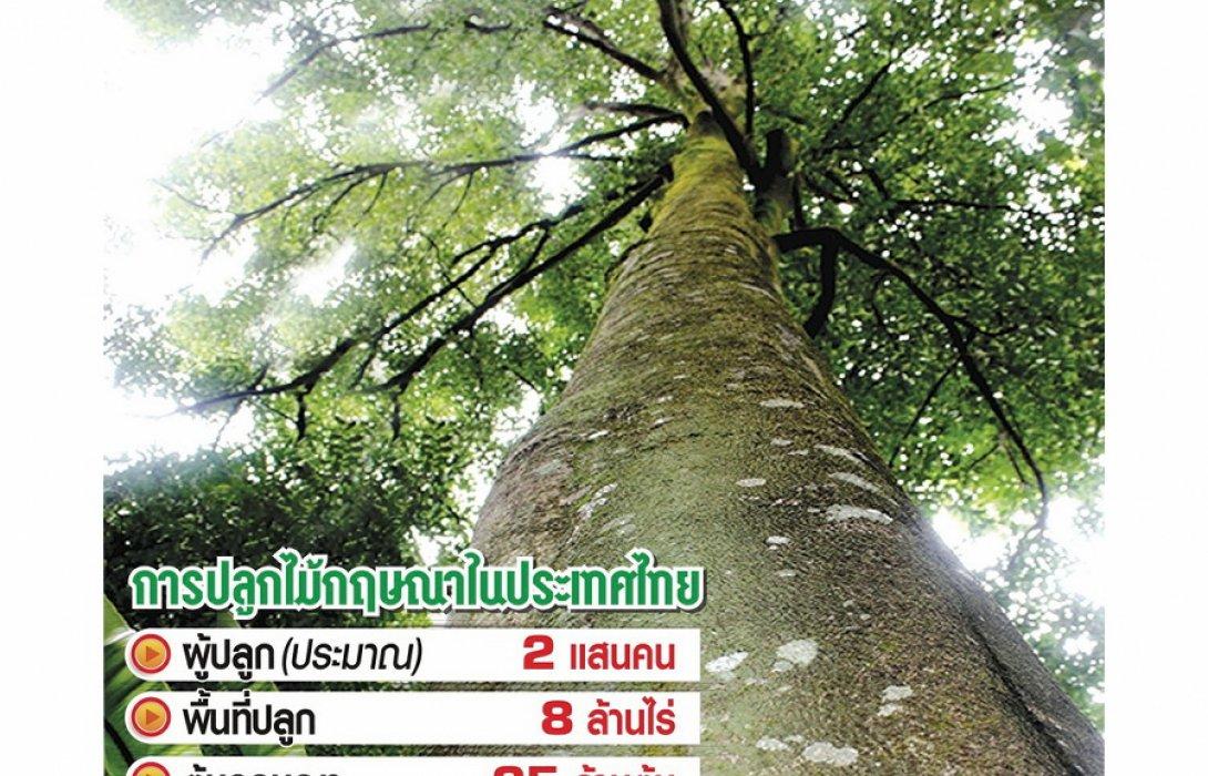 ผุด 'แบงก์' เจาะสินเชื่อต้นไม้ กฤษณา..ฮอต 5 แสนล้าน!