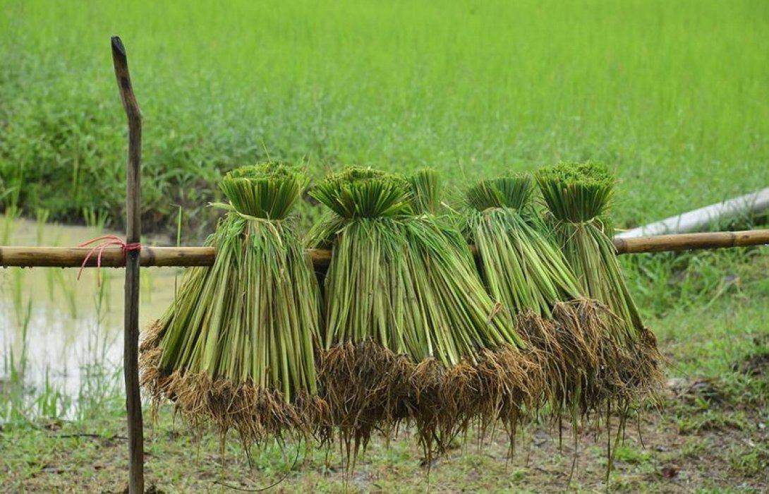 """กระทรวงเกษตรฯ ฟิตจัดเดินหน้าขับเคลื่อนระบบ """"เกษตรพันธสัญญา"""