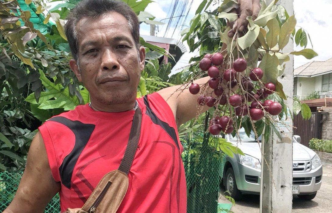 ไม้แปลก…ทำเงิน สวนลุงแดง ไม้ไทย