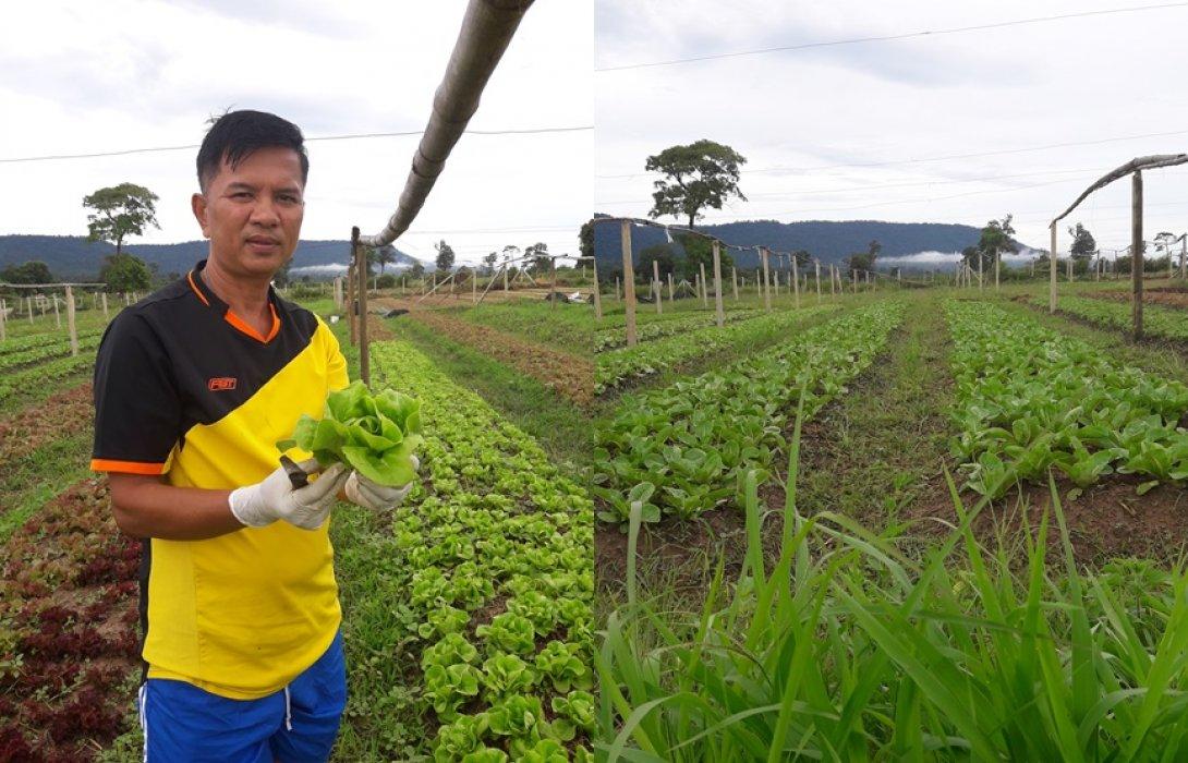 """เกษตรทำเงิน : หนีกรุงมุ่งเกษตรอินทรีย์  ปลูกผักขายรายได้ดี """"พยูงศักดิ์ ทวีกันย์"""""""