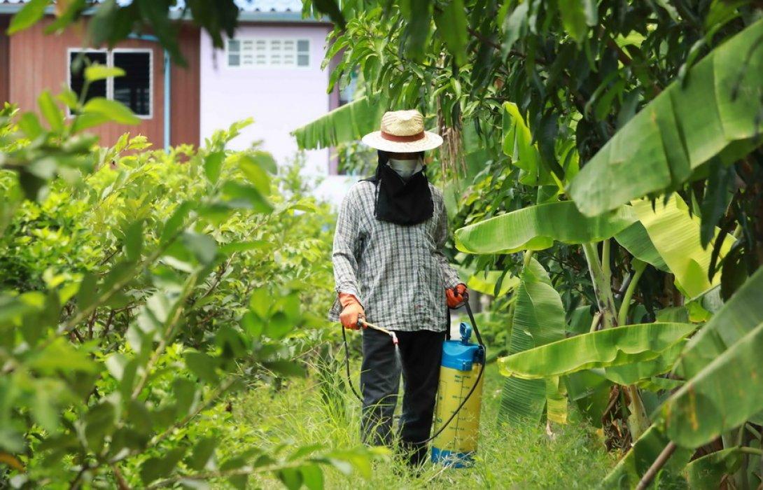 """""""เครือข่ายราชบุรีโมเดล"""" ร่วม """"หน่วยงานรัฐ"""" ชู ต้นแบบเกษตร GAP ใช้เคมีไร้สารตกค้าง"""