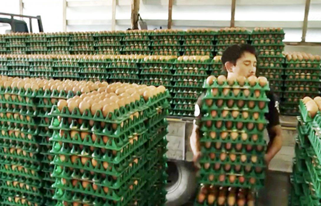 """""""เกษตรกรเลี้ยงไก่"""" เผย ผลผลิตไข่สะสมมาก สวนกำลังซื้อลดลงแล้ว ทำราคาไข่ตกต่ำลง"""