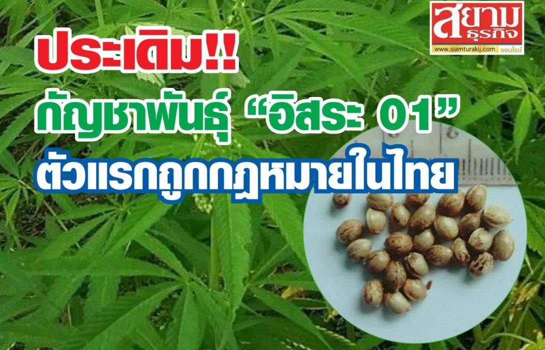 """ประเดิม!! กัญชาพันธุ์ """"อิสระ 01"""" ตัวแรกถูกกฎหมายในไทย"""