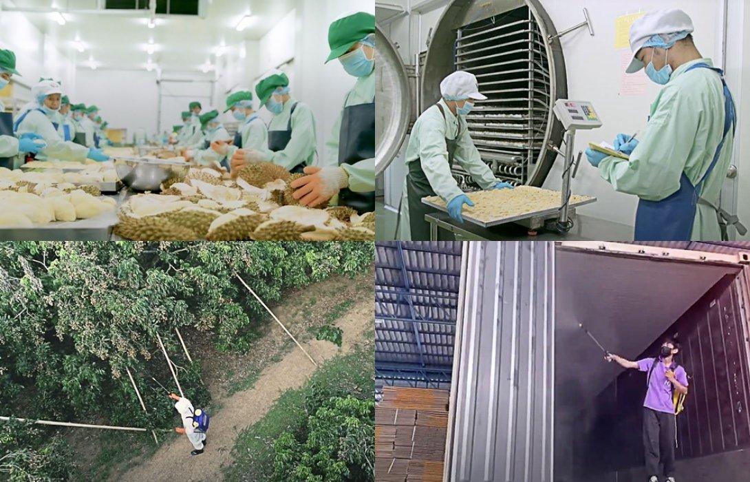"""""""DITP"""" เพิ่มมาตรการจัดการสินค้าผลไม้  เน้นย้ำ สินคาอาหารไทยปลอดการปนเปื้อนเชื้อไวรัสโควิด เพิ่มความเชื่อมั่นให้ผู้บริโภคทั่วโลกใน"""