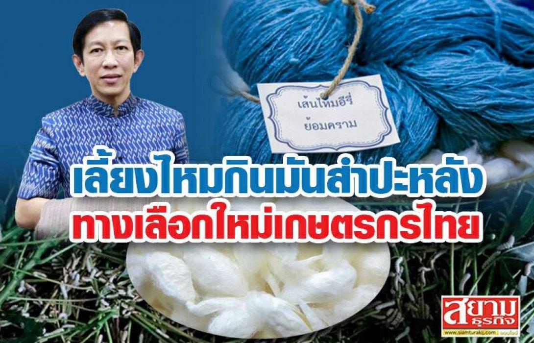 เลี้ยงไหมกินมันสำปะหลัง …ทางเลือกใหม่เกษตรกรไทย