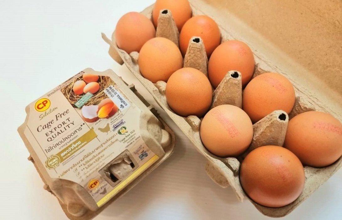 CPFลุยไข่ไก่ Cage Free ตอบโจทย์ผู้บริโภค