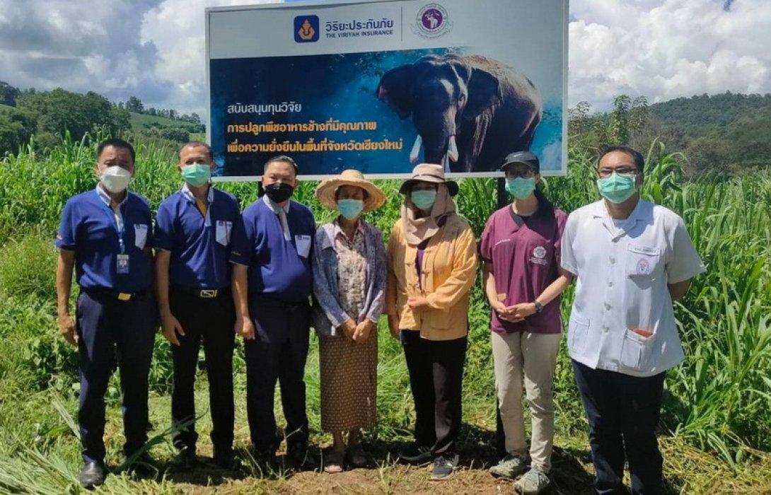 วิริยะประกันภัยติดตามโครงการปลูกพืชอาหารช้าง เพื่อความยังยืนในพื้นที่จังหวัดเชียงใหม่