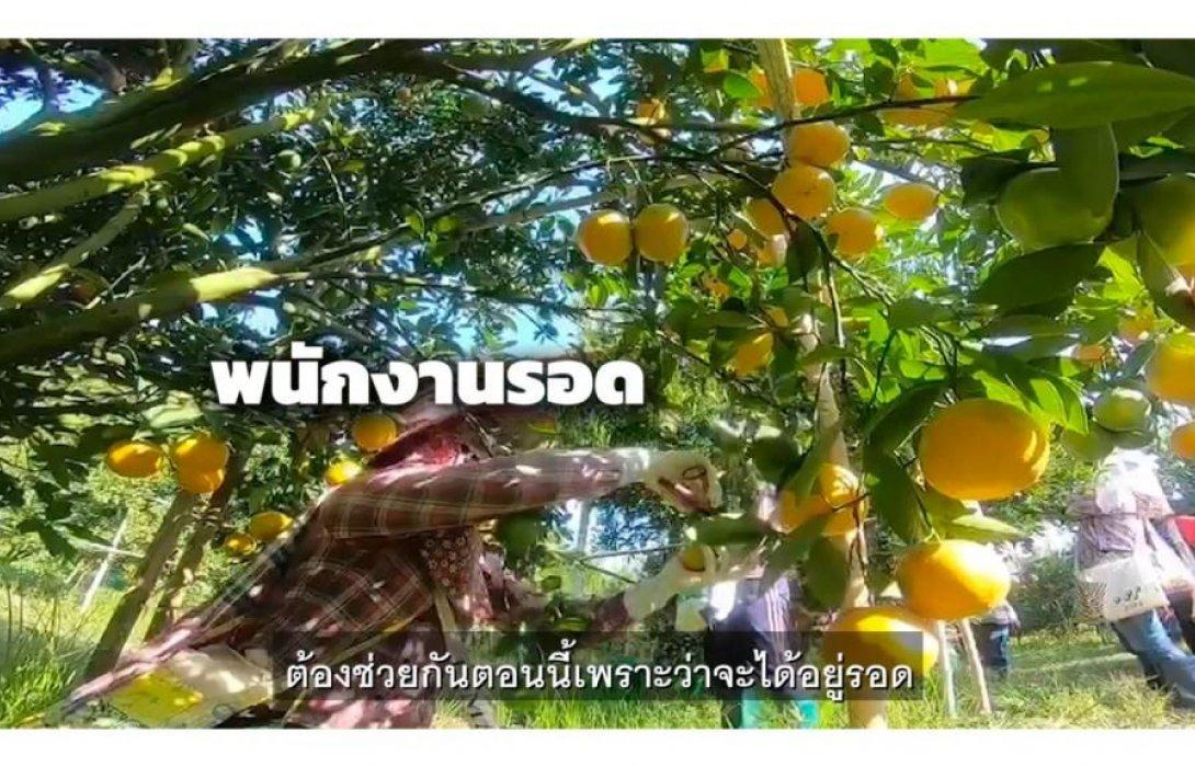 """กสิกรไทย ปั้น""""รวมใจช้อปของไทย""""ระบายผลไม้สด-เกษตรแปรรูป ผ่านช่วงโควิด-19"""